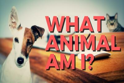 What Animal Am I?